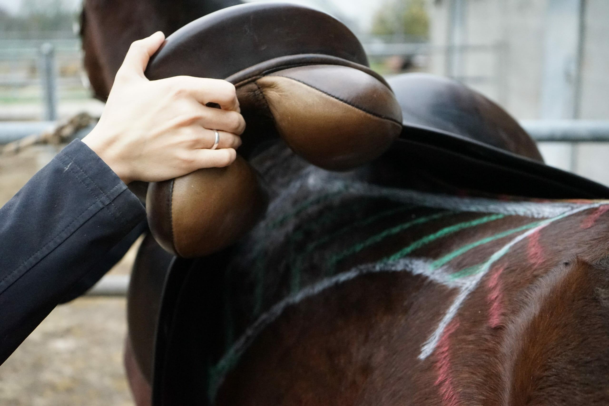 ilaria saddle service - saddle fitting