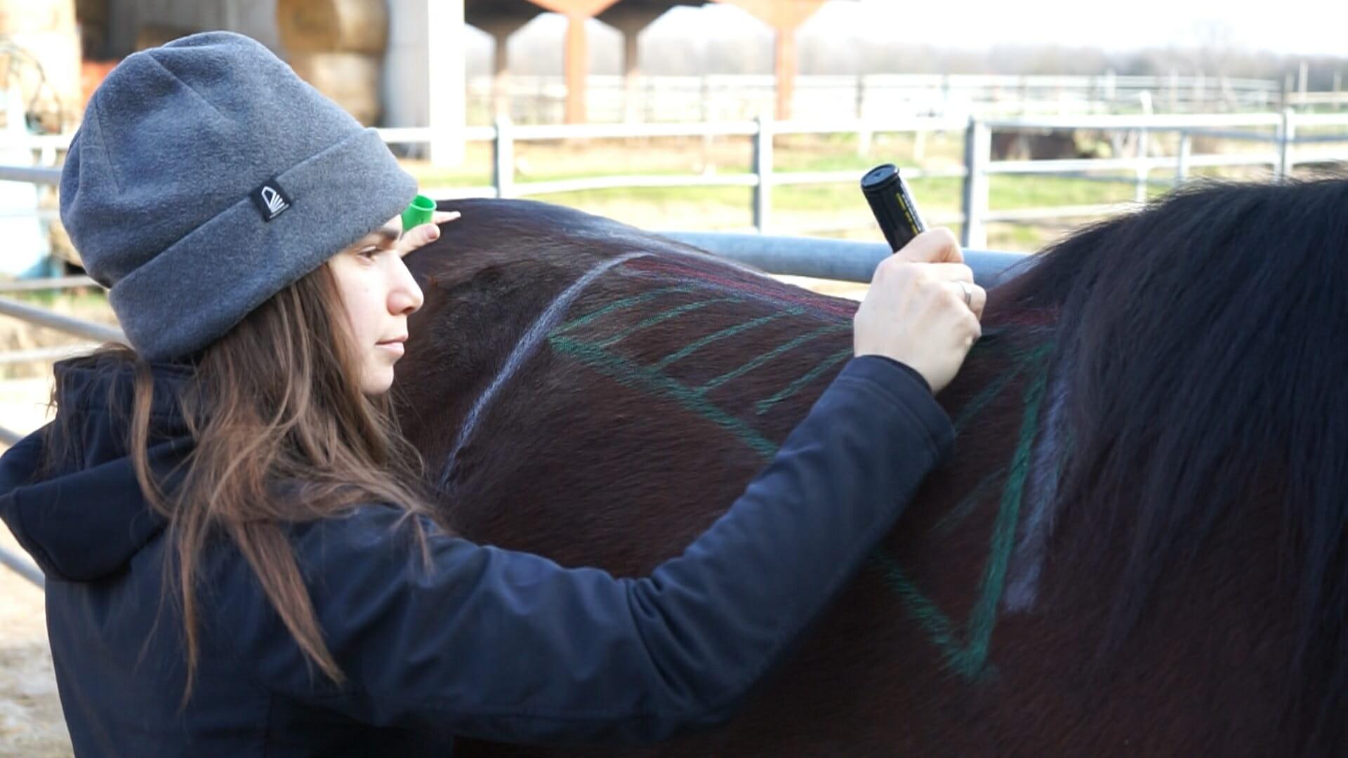 Ilaria saddle service - saddle fitting - selle su misura - consulenze