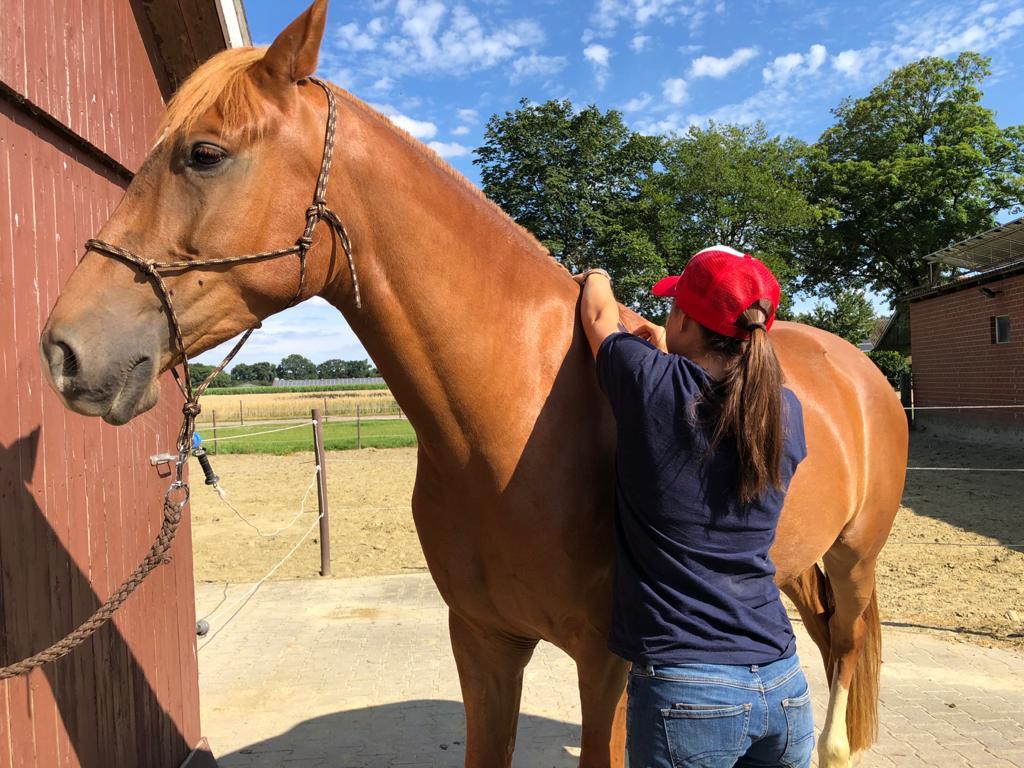 ilaria saddle service consulenze saddle fitting italia